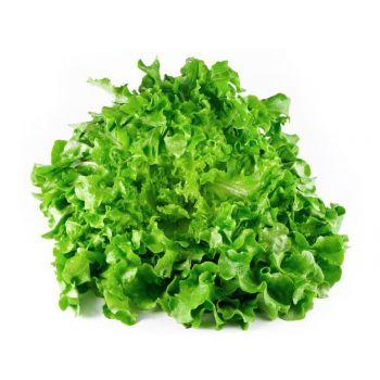 Lettuce Lollo Green Bionda