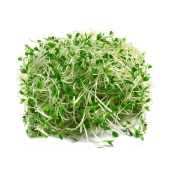 Sprouts Alfalfa