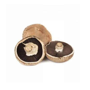 Mushroom Portobello