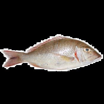 sherry  Fish whole