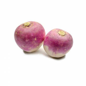 Turnip Mini