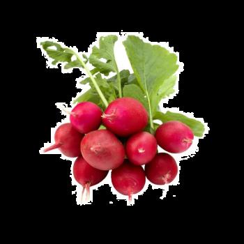 Radish Red Bunch